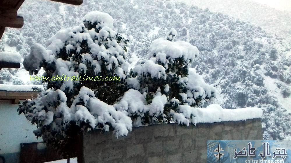 chitral snow fall