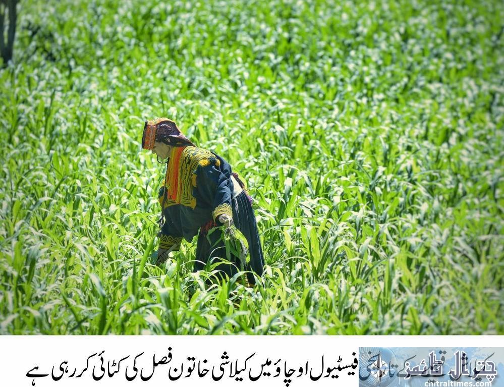 kalash festival Ochaw started in Chitral 24